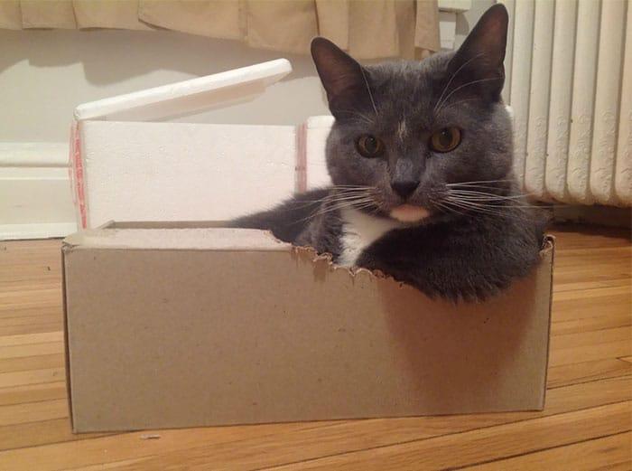 11-15 Ada-ada Aja Pilihan Tempat Tidur 18 Kucing yang Kocak Abis Ini