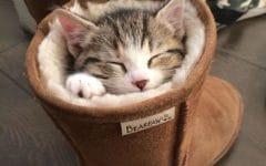 13 13 e1506161324571 240x150 - Ada-ada Aja Pilihan Tempat Tidur 18 Kucing yang Kocak Abis Ini