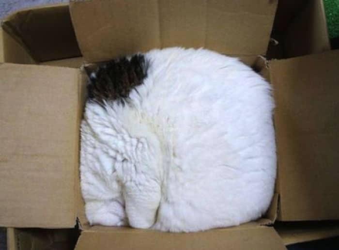 4-20 Ada-ada Aja Pilihan Tempat Tidur 18 Kucing yang Kocak Abis Ini