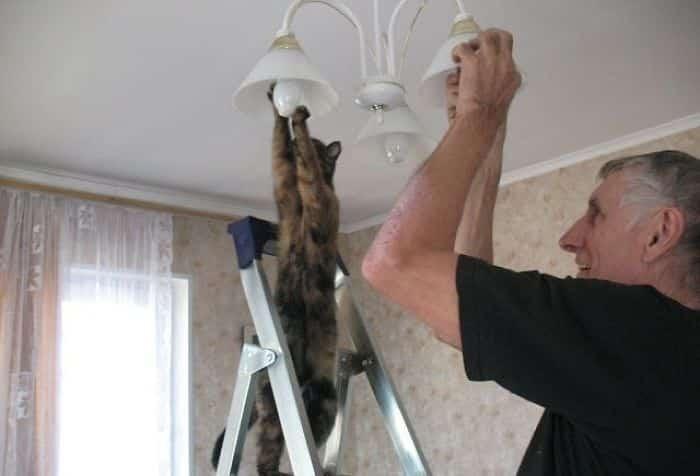5934f8bac5e32 hUwJe 700 - Lagi Bete? 20 Foto Tingkah Kucing yang Lucu dan Gak Biasa Ini bisa Bikin Kamu Ketawa Seketika