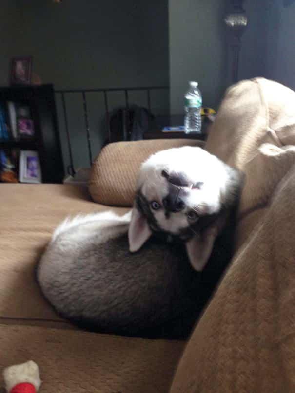 59413901c37df afKCb46r 605 59429e3d18563 605 - Menggemaskan! 16 Foto Anjing yang Ceria Ini Bisa jadi Mood Booster Buat Kamu