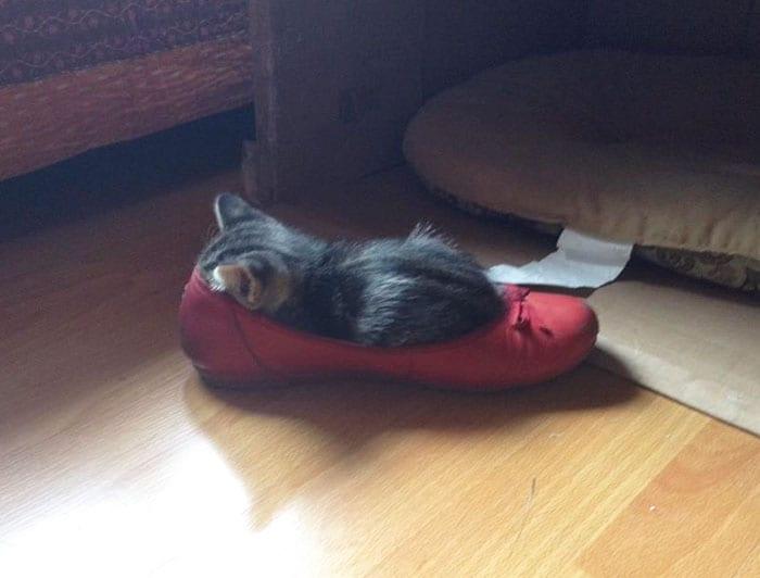 8-17 Ada-ada Aja Pilihan Tempat Tidur 18 Kucing yang Kocak Abis Ini