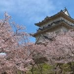 Odawara Castle Sakura 150x150 - Rimma.co - Smart is the New Chic