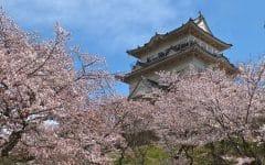 Odawara Castle Sakura 240x150 - Anti Mainstream, 4 Cara Menikmati Bunga Sakura Ini Bakal Bikin Liburanmu Jadi Lebih Berkesan