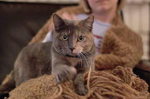 c3606c6be3abed68ad249545658e1402_catslove1 Ini Dia 7 Cara Kucing Berkomunikasi Dengan Tuannya, Mana Yang Paling Sering Ditunjukkan Kucing Peliharaanmu?