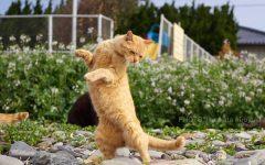 cat poses martial arts 6 240x150 - Kucing Juga Bisa Jadi Ninja, Cek Aksi Lincahnya Dalam 11 Foto Ini!