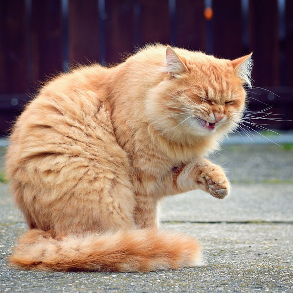 Image result for funny cat sneezing