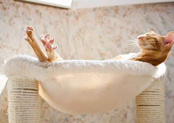 cats worshiping sun 201 593555ca6bad9 605 600x424 - 20 Foto Lucunya Saat Kucing Bermain dengan Sinar Matahari Ini Bakal Mencerahkan Harimu