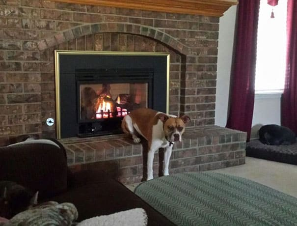 funny dogs acting weird 200 594379241ceee 605 - Menggemaskan! 16 Foto Anjing yang Ceria Ini Bisa jadi Mood Booster Buat Kamu