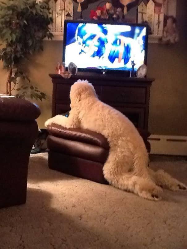 funny dogs acting weird 214 59439a0c5436d 605 - Menggemaskan! 16 Foto Anjing yang Ceria Ini Bisa jadi Mood Booster Buat Kamu