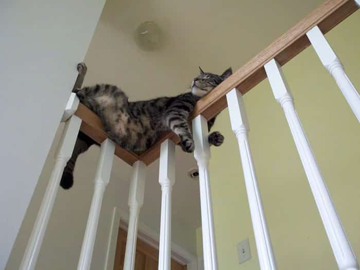 hey pandas share pics of your cat acting weird 108 5934fdc823033 700 - Lagi Bete? 20 Foto Tingkah Kucing yang Lucu dan Gak Biasa Ini bisa Bikin Kamu Ketawa Seketika