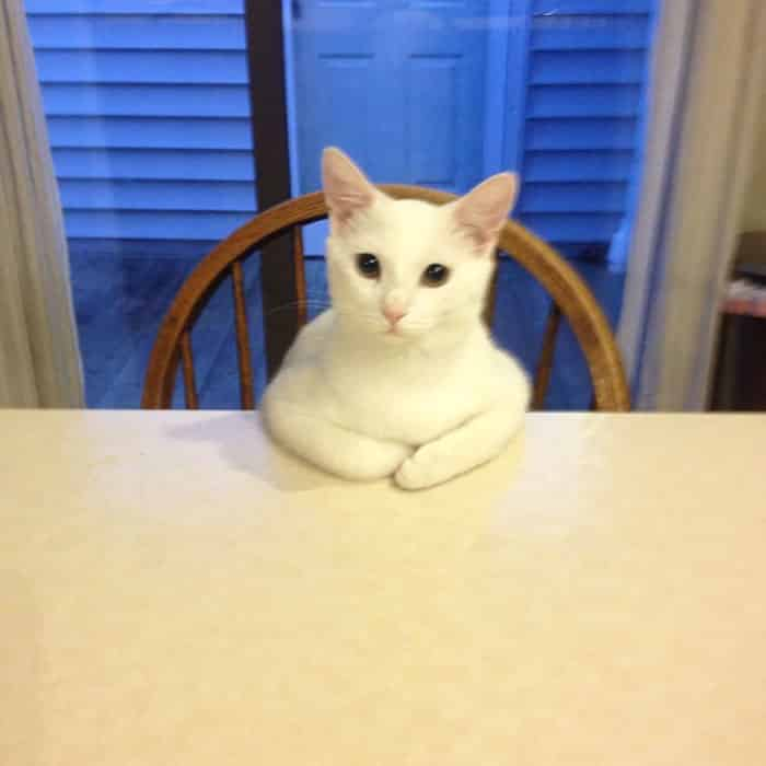hey pandas share pics of your cat acting weird 144 59354e4423211 700 - Lagi Bete? 20 Foto Tingkah Kucing yang Lucu dan Gak Biasa Ini bisa Bikin Kamu Ketawa Seketika