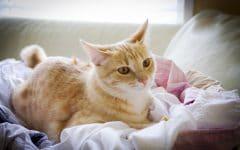 """petmd cat behavior 2 240x150 - Kucingmu """"Nakal"""" dan Bikin Pusing? Beri Tahu Peliharaan Kesayanganmu dengan 4 Cara Ini"""