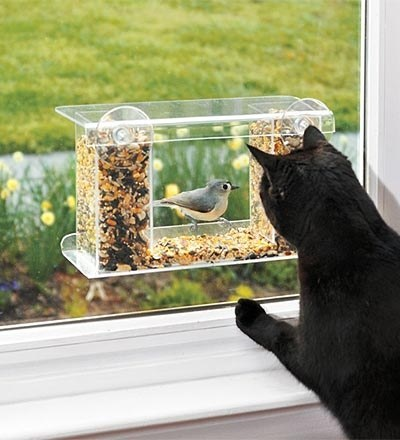 This window bird feeder, which is like TV FOR YOUR CATS.
