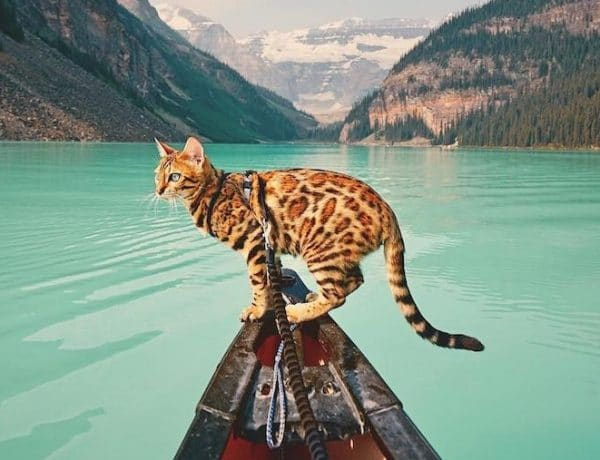 traveling-cat-sukii-16-600x460 Rimma.co - Smart is the New Chic